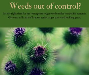 Weeds out of control?